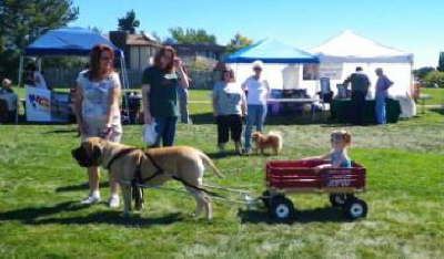 Bark in the Park 2010